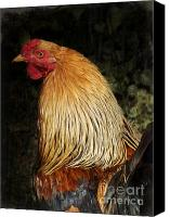 Ego Canvas Prints - Cock Canvas Print by Angela Doelling AD DESIGN Photo and PhotoArt