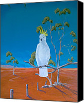 Paul Morgan Canvas Prints - Cockatoo  Canvas Print by Paul Morgan