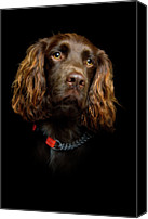 Animal Head Shot Canvas Prints - Cocker Spaniel Puppy Canvas Print by Andrew Davies