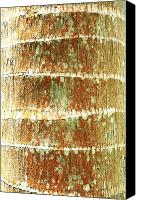 Brandon Tabiolo Canvas Prints - Coconut Palm Bark 2 Canvas Print by Brandon Tabiolo - Printscapes