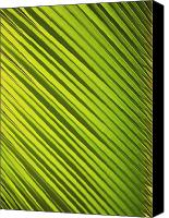 Brandon Tabiolo Canvas Prints - Coconut Palm Canvas Print by Brandon Tabiolo - Printscapes