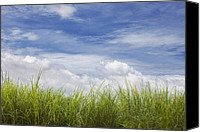 Gleam Canvas Prints - Cogon Grass Canvas Print by Skip Nall