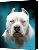 white bully pitbull