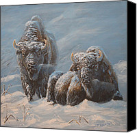 Buffalo Painting Canvas Prints - Cold Blue Canvas Print by Scott Thompson