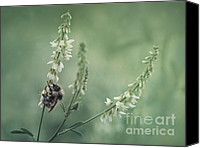 Bee Canvas Prints - Collecting The Summer Canvas Print by Priska Wettstein