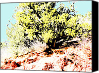 Garden Of The Gods Canvas Prints - Color Drawing of a Tree by a Camera Canvas Print by Lenore Senior