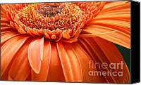 Garden Flowers Canvas Prints - Color Canvas Print by Kristin Kreet