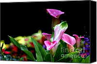 Canna Lilies Canvas Prints - Color My World Canvas Print by Living Color Photography Lorraine Lynch
