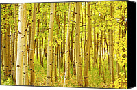Giclee Trees Canvas Prints - Colorado Fall Foliage Aspen Landscape Canvas Print by James Bo Insogna