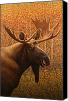 Bull Moose Canvas Prints - Colorado Moose Canvas Print by James W Johnson