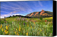 Colorado Canvas Prints - Colorado Wildflowers Canvas Print by Scott Mahon