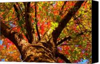 "\""striking Photography\\\"" Canvas Prints - Colorful Autumn Abstract Canvas Print by James Bo Insogna"