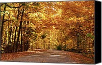 Indiana Autumn Canvas Prints - Colorful Canopy Canvas Print by Sandy Keeton