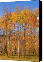 Buy Framed Prints Canvas Prints - Colorful Colorado Autumn Colors Canvas Print by James Bo Insogna