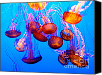 Jelly- Fish Canvas Prints - Colorful Jellies Canvas Print by Ellen Lacey