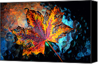 Akermans Art Canvas Prints - Colorful Maple 2012 Canvas Print by Beth Akerman