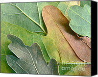 Lime Canvas Prints - Colorful Oak Tree Leaves Canvas Print by Jennie Marie Schell