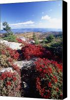 Acadia Canvas Prints - Colors of Cadillac Mountain Canvas Print by George Oze