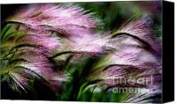 Abstract Photo Canvas Prints - Colors Of Grass Canvas Print by Terril Heilman