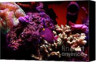 Bruster Canvas Prints - Colors of Underwater Life Canvas Print by Clayton Bruster