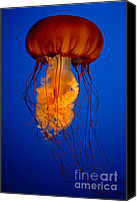 Jelly- Fish Canvas Prints - Colours of The Jelly Fish Canvas Print by David  Naman