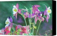 Bouquet Pastels Canvas Prints - Columbine Canvas Print by James Geddes