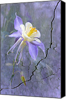 Canna Canvas Prints - Columbine on Cracked wall Canvas Print by James Steele