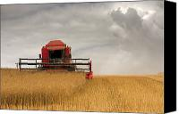 Cultivation Canvas Prints - Combine Harvester, North Yorkshire Canvas Print by John Short