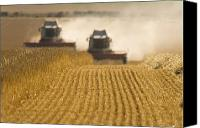 Cultivation Canvas Prints - Combine Harvesters In A Field Canvas Print by John Short