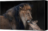 National Zoo Canvas Prints - Come On Dad Canvas Print by Glenn Thompson