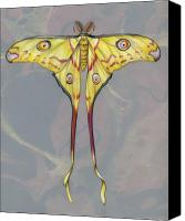 Insects Mixed Media Canvas Prints - Comet Moth Canvas Print by Mindy Lighthipe