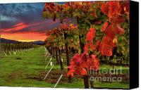 Napa Valley Canvas Prints - Compelling Canvas Print by Mars Lasar