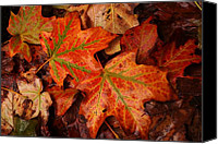 Matthew Green Canvas Prints - Complementary Contrast Leaves Canvas Print by Matthew Green