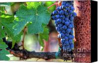 Blue Grapes Canvas Prints - Complete Cabernet Canvas Print by Mars Lasar