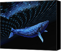 Whale Canvas Prints - Computer Artwork Of A Humpback Whale Canvas Print by Victor Habbick Visions