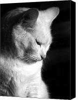 Feline  Canvas Prints - Contempation  Canvas Print by Bob Orsillo