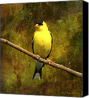 Walker Digital Art Canvas Prints - Contemplating Goldfinch Canvas Print by J Larry Walker