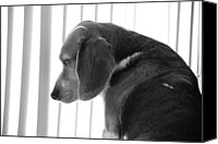 Lost In Thought Canvas Prints - Contemplative Beagle Canvas Print by Jennifer Lyon