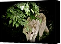 Wolf Photo Shot Canvas Prints - Cool Spot Canvas Print by Debra     Vatalaro