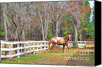Filly Canvas Prints - Coosaw - Outside the Fence Canvas Print by Scott Hansen