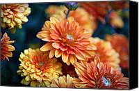 Autumn Photographs Canvas Prints - Copper Mums Canvas Print by Cricket Hackmann