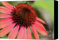 Cone Flowers Canvas Prints - Coral Cone Flower Too Canvas Print by Sabrina L Ryan