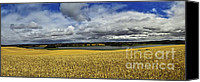 Rural Scenes Photo Canvas Prints - Corn Field Panorama Canvas Print by Heiko Koehrer-Wagner