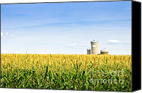 Prairie Canvas Prints - Corn field with silos Canvas Print by Elena Elisseeva