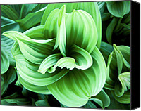 Green Reliefs Canvas Prints - Corn Lily Canvas Print by Joe  Palermo