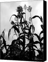 Debbie Canvas Prints - Corn Plant  Canvas Print by Deborah  Crew-Johnson