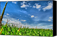 Summer Scenes Canvas Prints - Corn Top Sky Canvas Print by Emily Stauring