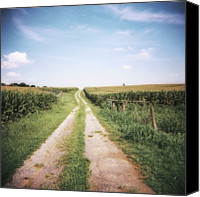 Dirt Road Canvas Prints - Cornfield After Harvest Canvas Print by Pam Ullman