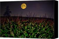 Country Scenes Photo Canvas Prints - Cornfield Moon Tree Canvas Print by Emily Stauring