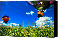 Spiritual Photo Canvas Prints - Cornfield View Hot Air Balloons Canvas Print by Bob Orsillo